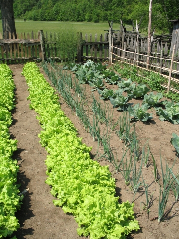 Vegetable garden planted in the style of colonial America located in Smoky Mountains National Park North Carolina.